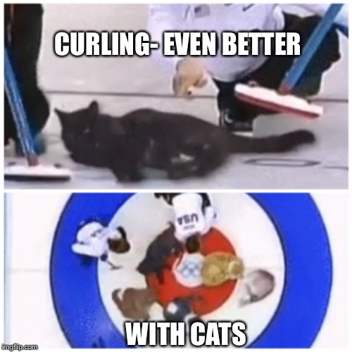 Curling up with a good cat | CURLING- EVEN BETTER WITH CATS | image tagged in winter olympics,funny cat memes,sports,funny memes | made w/ Imgflip meme maker