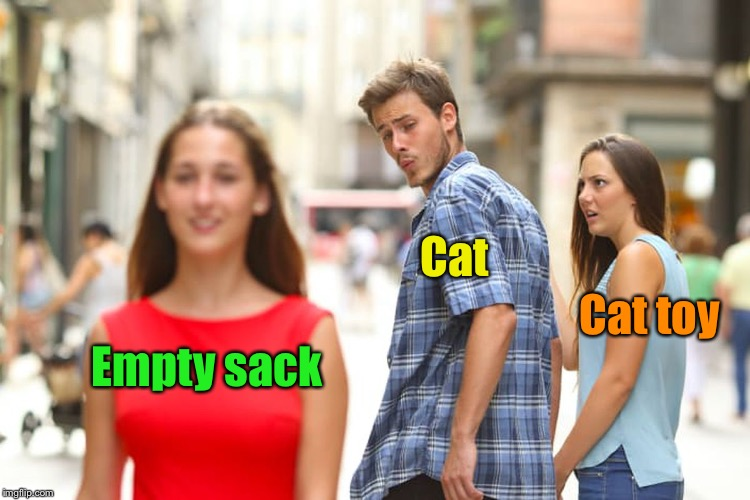 Pet toys are for pet owners, not pets  | Empty sack Cat Cat toy | image tagged in memes,distracted boyfriend,cats,toys,irony,waste of money | made w/ Imgflip meme maker