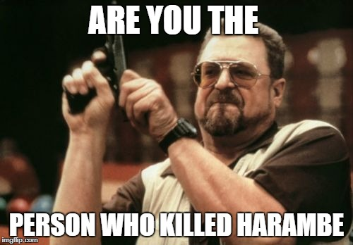 Am I The Only One Around Here Meme | ARE YOU THE PERSON WHO KILLED HARAMBE | image tagged in memes,am i the only one around here | made w/ Imgflip meme maker