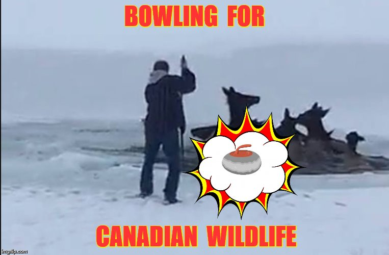 BOWLING  FOR CANADIAN  WILDLIFE | made w/ Imgflip meme maker