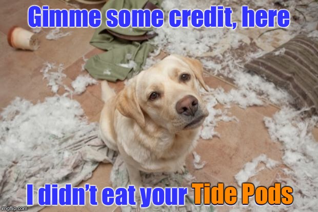 Dog's not stupid | Gimme some credit, here I didn't eat your Tide Pods Tide Pods | image tagged in bad dog,memes,tide pods,funny memes,drsarcasm | made w/ Imgflip meme maker
