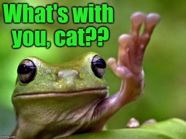 screw you | What's with you, cat?? | image tagged in screw you | made w/ Imgflip meme maker
