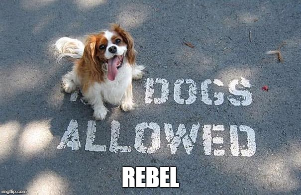 no banning dogs | REBEL | image tagged in dogs,doge | made w/ Imgflip meme maker