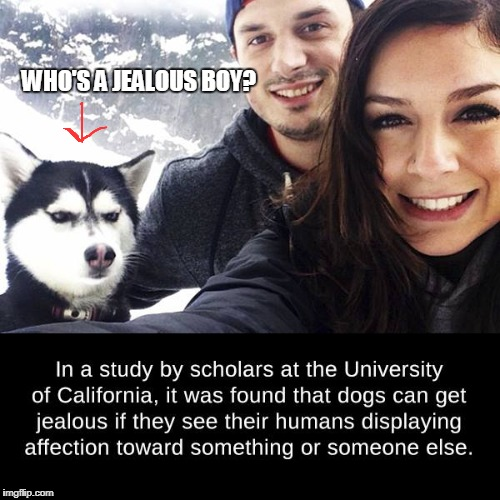 Jealous Dog | WHO'S A JEALOUS BOY? | image tagged in dogs,doge | made w/ Imgflip meme maker