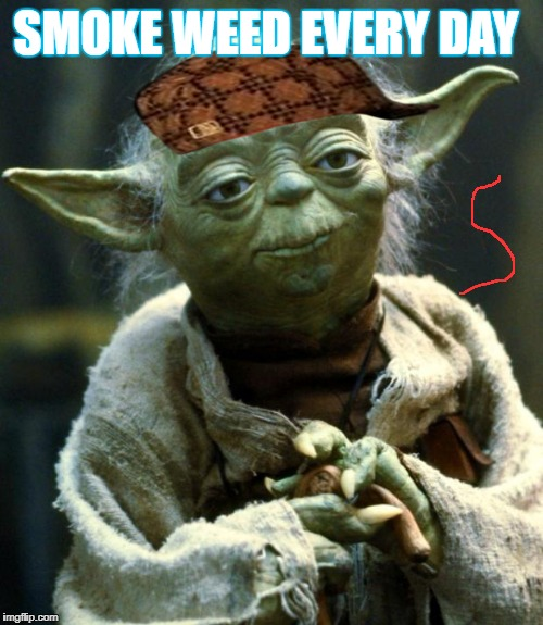 Star Wars Yoda Meme | SMOKE WEED EVERY DAY | image tagged in memes,star wars yoda,scumbag | made w/ Imgflip meme maker
