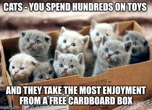 box of cats | CATS - YOU SPEND HUNDREDS ON TOYS AND THEY TAKE THE MOST ENJOYMENT FROM A FREE CARDBOARD BOX | image tagged in box of cats | made w/ Imgflip meme maker