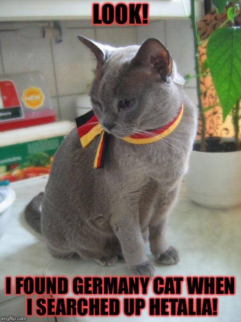 (Germany cat in real life is what I frogot to put XP) | LOOK! I FOUND GERMANY CAT WHEN I SEARCHED UP HETALIA! | image tagged in memes,meme,hetalia,cats,cat,germany | made w/ Imgflip meme maker