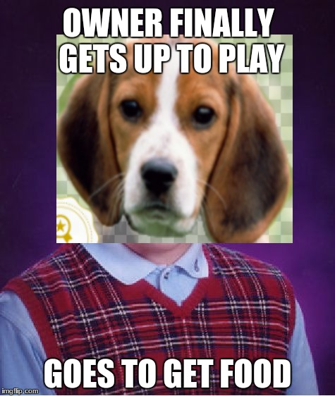 Bad Luck Beagle | OWNER FINALLY GETS UP TO PLAY GOES TO GET FOOD | image tagged in memes,dog | made w/ Imgflip meme maker