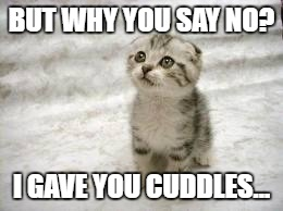 Sad Cat | BUT WHY YOU SAY NO? I GAVE YOU CUDDLES... | image tagged in memes,sad cat | made w/ Imgflip meme maker