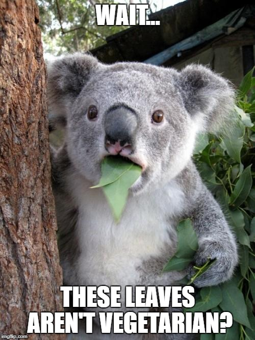Surprised Koala Meme | WAIT... THESE LEAVES AREN'T VEGETARIAN? | image tagged in memes,surprised koala | made w/ Imgflip meme maker