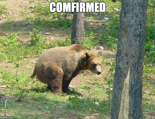 I hear this way too often. Does a bear shit in the woods?  | COMFIRMED | image tagged in bear,random,woods | made w/ Imgflip meme maker