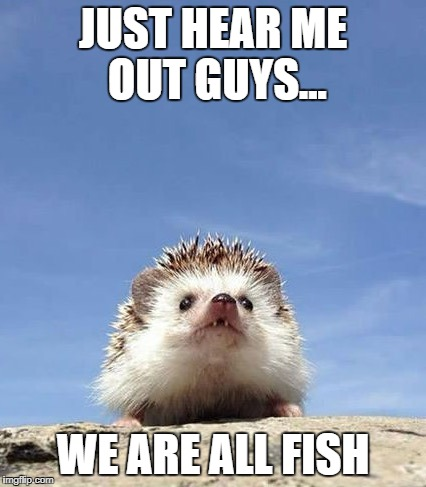 JUST HEAR ME OUT GUYS... WE ARE ALL FISH | image tagged in hedgehog | made w/ Imgflip meme maker