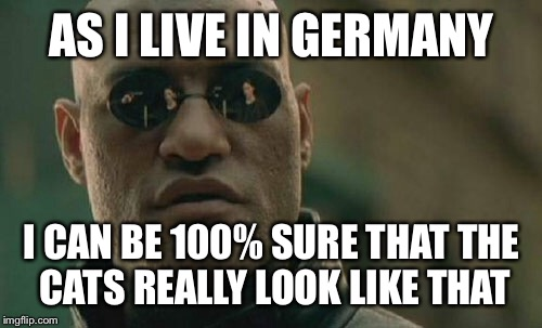 Matrix Morpheus Meme | AS I LIVE IN GERMANY I CAN BE 100% SURE THAT THE CATS REALLY LOOK LIKE THAT | image tagged in memes,matrix morpheus | made w/ Imgflip meme maker