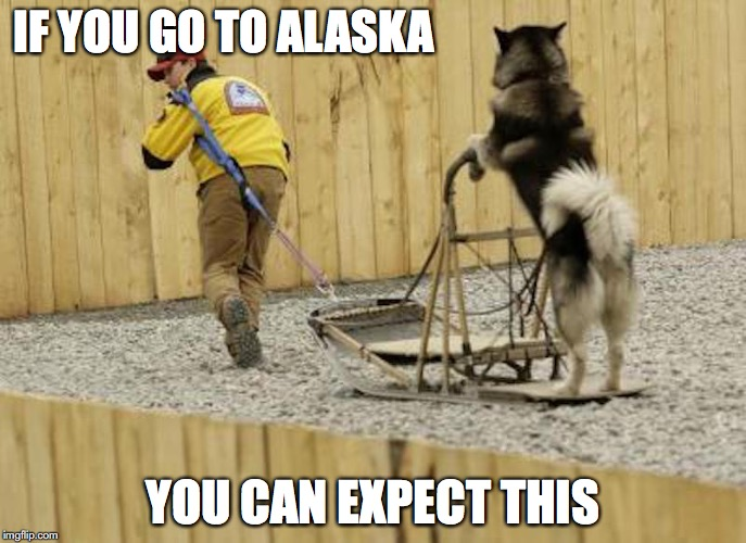 Alaskan Dog Sled | IF YOU GO TO ALASKA YOU CAN EXPECT THIS | image tagged in dog sled,alaska,memes | made w/ Imgflip meme maker