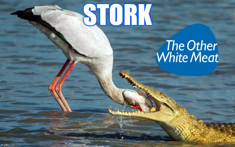 STORK | image tagged in stork,crocodile,pork | made w/ Imgflip meme maker