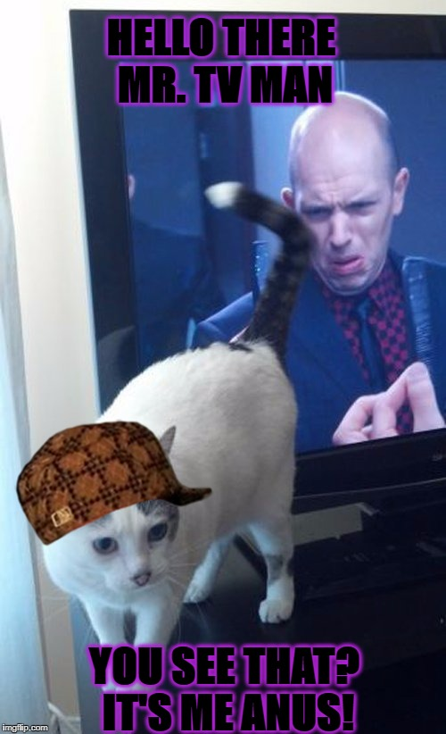 HELLO THERE MR. TV MAN YOU SEE THAT? IT'S ME ANUS! | image tagged in cat butt,scumbag | made w/ Imgflip meme maker