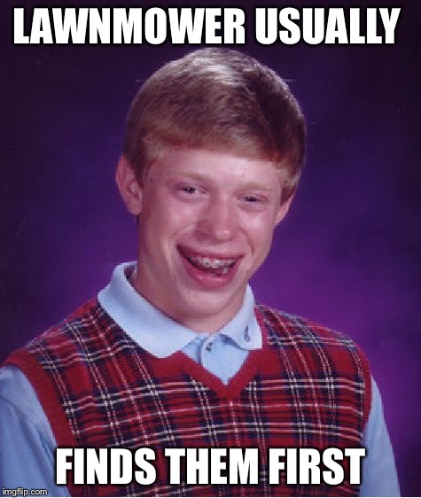 Bad Luck Brian Meme | LAWNMOWER USUALLY FINDS THEM FIRST | image tagged in memes,bad luck brian | made w/ Imgflip meme maker