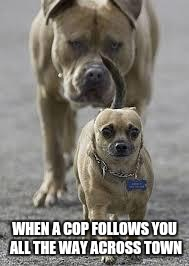 big dog little dog | WHEN A COP FOLLOWS YOU ALL THE WAY ACROSS TOWN | image tagged in big dog little dog,cop | made w/ Imgflip meme maker