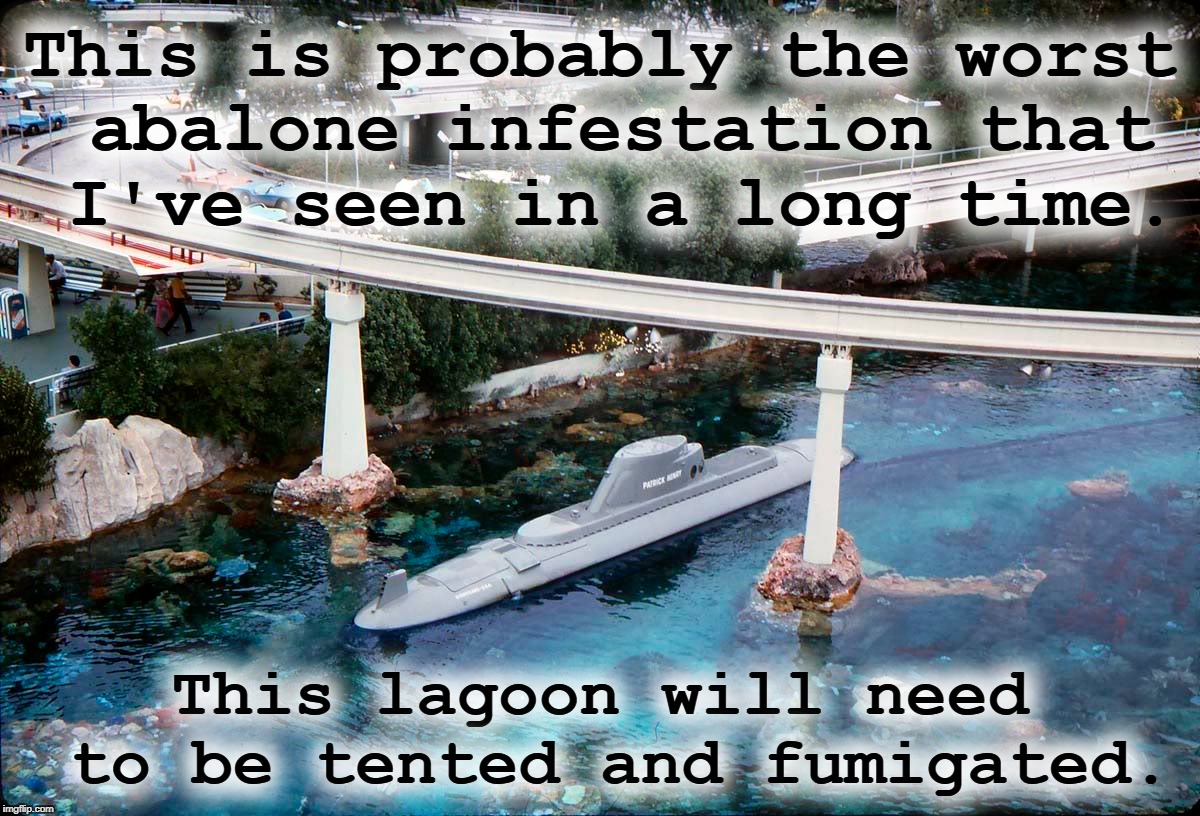 This is probably the worst abalone infestation that I've seen in a long time. This lagoon will need to be tented and fumigated. | made w/ Imgflip meme maker