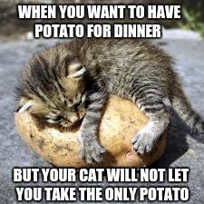 WHEN YOU WANT TO HAVE POTATO FOR DINNER BUT YOUR CAT WILL NOT LET YOU TAKE THE ONLY POTATO | image tagged in cat | made w/ Imgflip meme maker