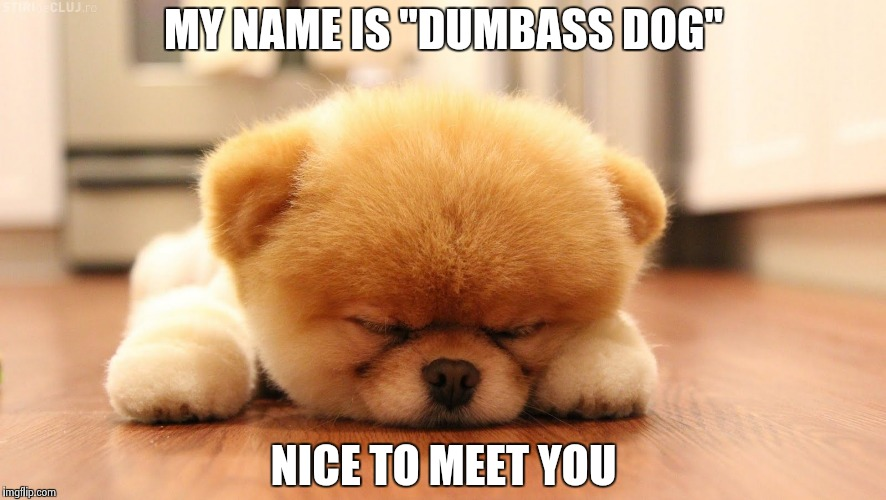 "Sleeping dog | MY NAME IS ""DUMBASS DOG"" NICE TO MEET YOU 