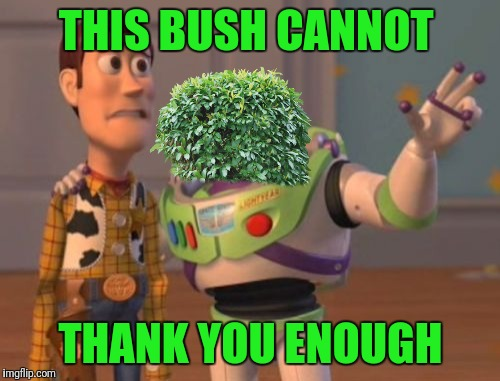 X, X Everywhere Meme | THIS BUSH CANNOT THANK YOU ENOUGH | image tagged in memes,x x everywhere | made w/ Imgflip meme maker