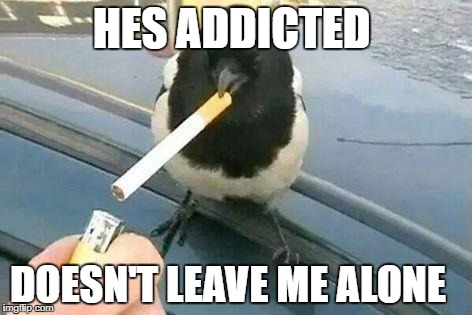 more more  | HES ADDICTED DOESN'T LEAVE ME ALONE | image tagged in cigarette,bird,addicted,funny,memes | made w/ Imgflip meme maker