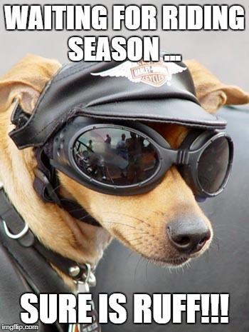 WAITING FOR RIDING SEASON ... SURE IS RUFF!!! | image tagged in harley davidson dog | made w/ Imgflip meme maker