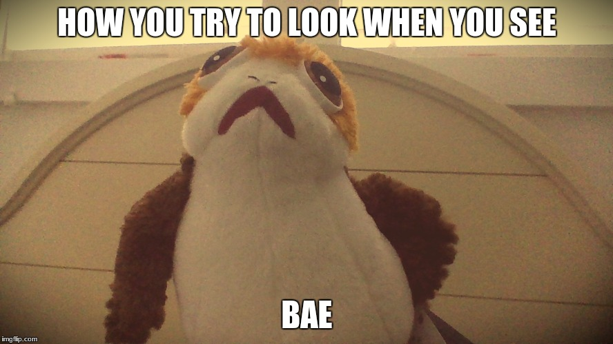 porg bae | HOW YOU TRY TO LOOK WHEN YOU SEE BAE | image tagged in porg,star wars,memes,funny memes | made w/ Imgflip meme maker