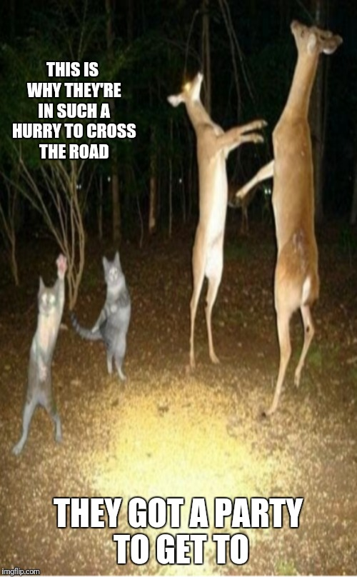 We're not the only partiers | THIS IS WHY THEY'RE IN SUCH A HURRY TO CROSS THE ROAD THEY GOT A PARTY TO GET TO | image tagged in memes,cats,deer,party,forest | made w/ Imgflip meme maker