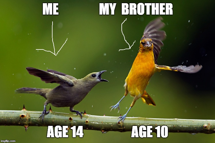 Brotherly love  | ME                MY  BROTHER AGE 14                   AGE 10 | image tagged in birds,brothers,funny memes,memes,lol | made w/ Imgflip meme maker