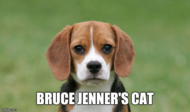 BRUCE JENNER'S CAT | image tagged in bruce jenner,beagle,transgender | made w/ Imgflip meme maker