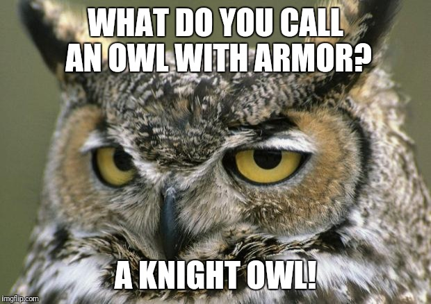 WHAT DO YOU CALL AN OWL WITH ARMOR? A KNIGHT OWL! | image tagged in owl | made w/ Imgflip meme maker