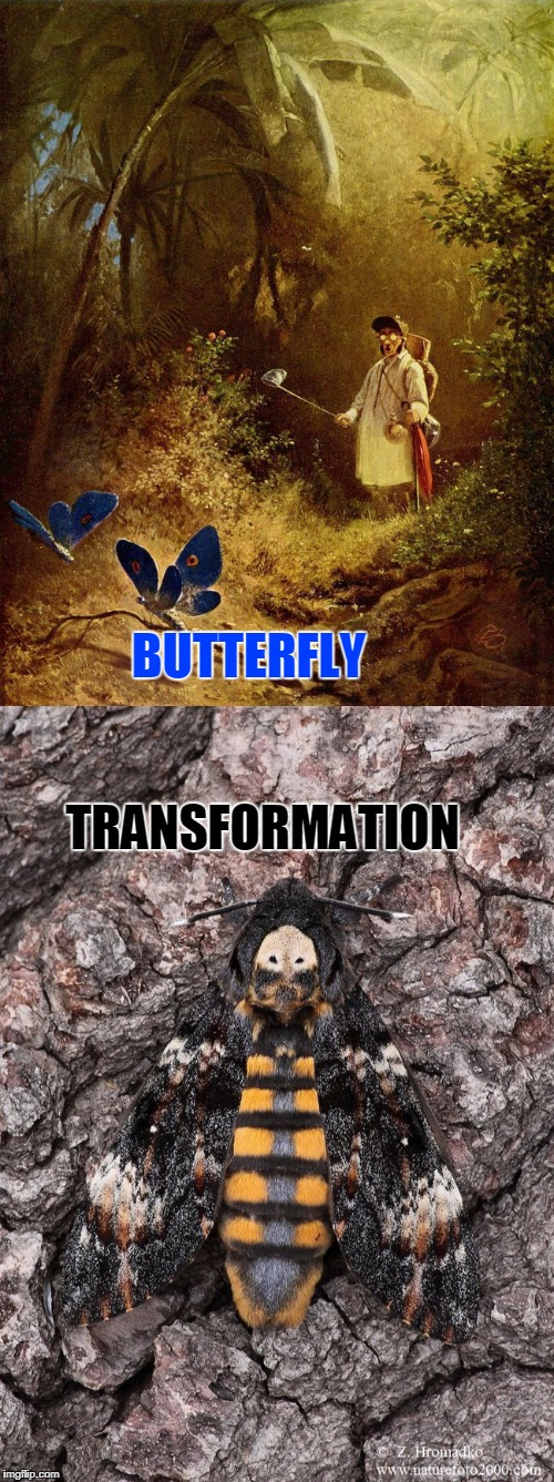 Magic butterfly hunt | BUTTERFLY TRANSFORMATION | image tagged in imgflip | made w/ Imgflip meme maker