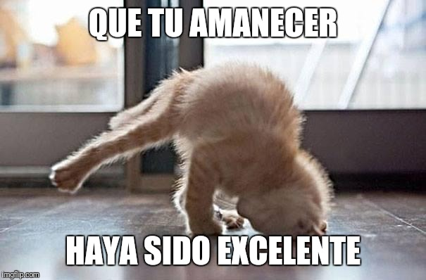 QUE TU AMANECER HAYA SIDO EXCELENTE | image tagged in yoga kitty | made w/ Imgflip meme maker