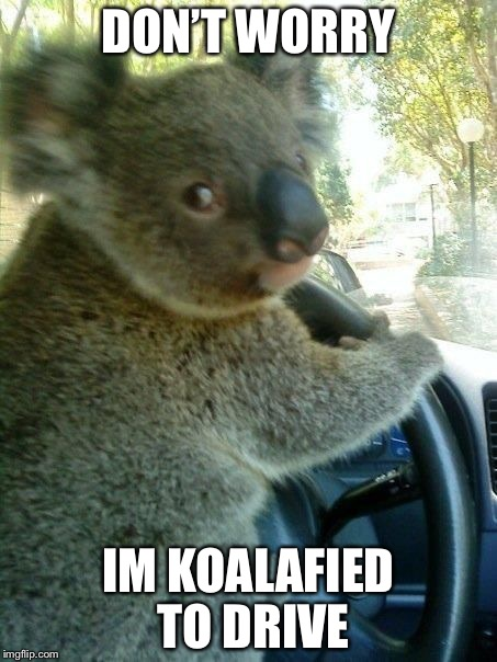 Driving koala  | DON'T WORRY IM KOALAFIED TO DRIVE | image tagged in driving koala | made w/ Imgflip meme maker