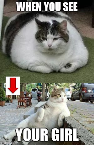 The Fat Cat to impress | WHEN YOU SEE YOUR GIRL | image tagged in funny cats,cats | made w/ Imgflip meme maker