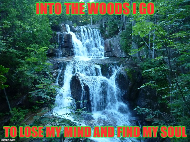 woods | INTO THE WOODS I GO TO LOSE MY MIND AND FIND MY SOUL | image tagged in lost in the woods | made w/ Imgflip meme maker