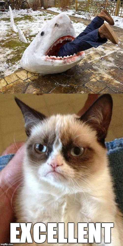 EXCELLENT | image tagged in funny,shark,frozen,eating,grumpy cat,excellent | made w/ Imgflip meme maker