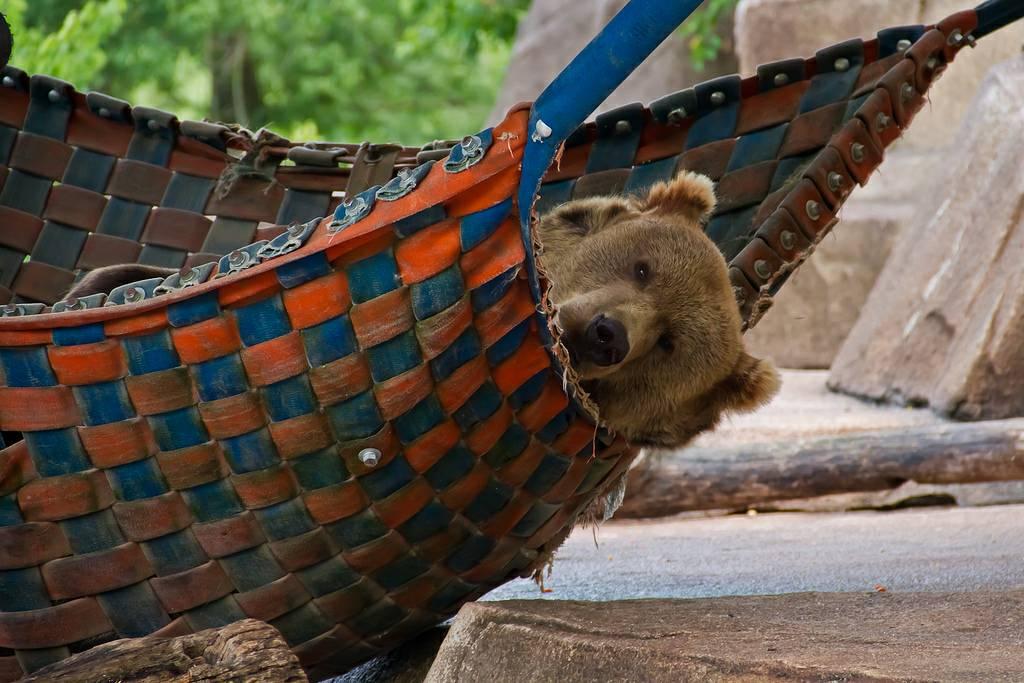 high quality bear hammock blank meme template bear hammock blank template   imgflip  rh   imgflip