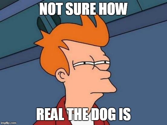 Futurama Fry Meme | NOT SURE HOW REAL THE DOG IS | image tagged in memes,futurama fry | made w/ Imgflip meme maker