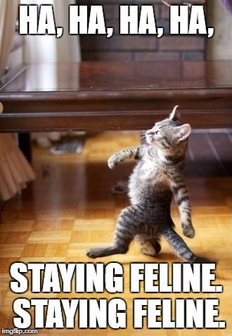 Cool Cat Stroll Meme | HA, HA, HA, HA, STAYING FELINE. STAYING FELINE. | image tagged in memes,cool cat stroll | made w/ Imgflip meme maker