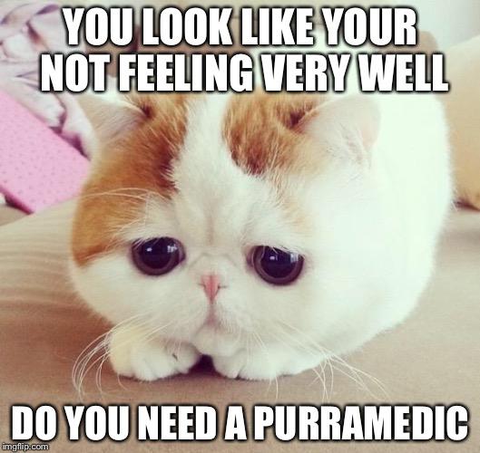 Cat Face Meme More Pie