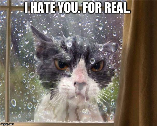 Left out | I HATE YOU. FOR REAL. | image tagged in left out,funny,funny meme,cats,cat | made w/ Imgflip meme maker