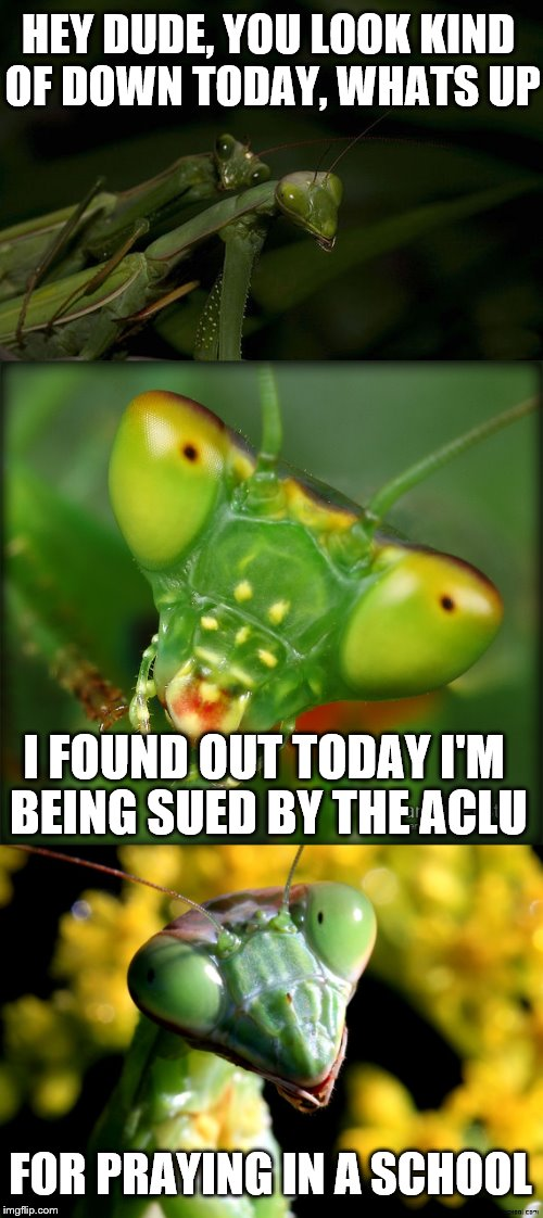 Is it time for a mantis comeback? | HEY DUDE, YOU LOOK KIND OF DOWN TODAY, WHATS UP I FOUND OUT TODAY I'M BEING SUED BY THE ACLU FOR PRAYING IN A SCHOOL | image tagged in memes,mantis,so 2016 | made w/ Imgflip meme maker