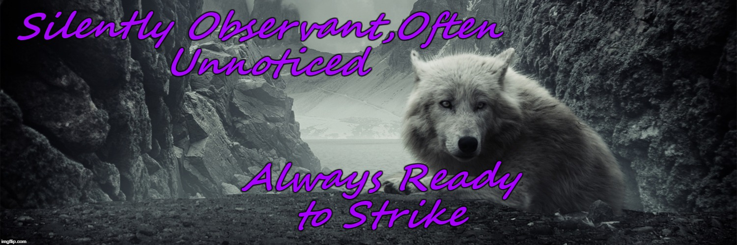 Silently Observant,Often Unnoticed Always Ready to Strike | image tagged in lone wolf,header | made w/ Imgflip meme maker