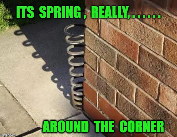 ITS  SPRING ,  REALLY, . . . . . . AROUND  THE  CORNER | image tagged in spring | made w/ Imgflip meme maker