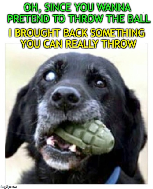 See You In Hell | OH, SINCE YOU WANNA PRETEND TO THROW THE BALL I BROUGHT BACK SOMETHING YOU CAN REALLY THROW | image tagged in fetch,dogs,play,grenade | made w/ Imgflip meme maker
