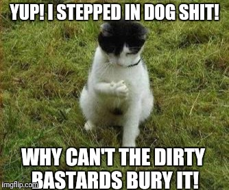 Stepped in dog shit! | YUP! I STEPPED IN DOG SHIT! WHY CAN'T THE DIRTY BASTARDS BURY IT! | image tagged in funny cat,funny dog shit,funny i stepped in dog shit | made w/ Imgflip meme maker