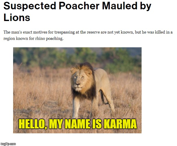 When the hunter becomes the hunted... | HELLO, MY NAME IS KARMA | image tagged in poaching,lions,lion | made w/ Imgflip meme maker
